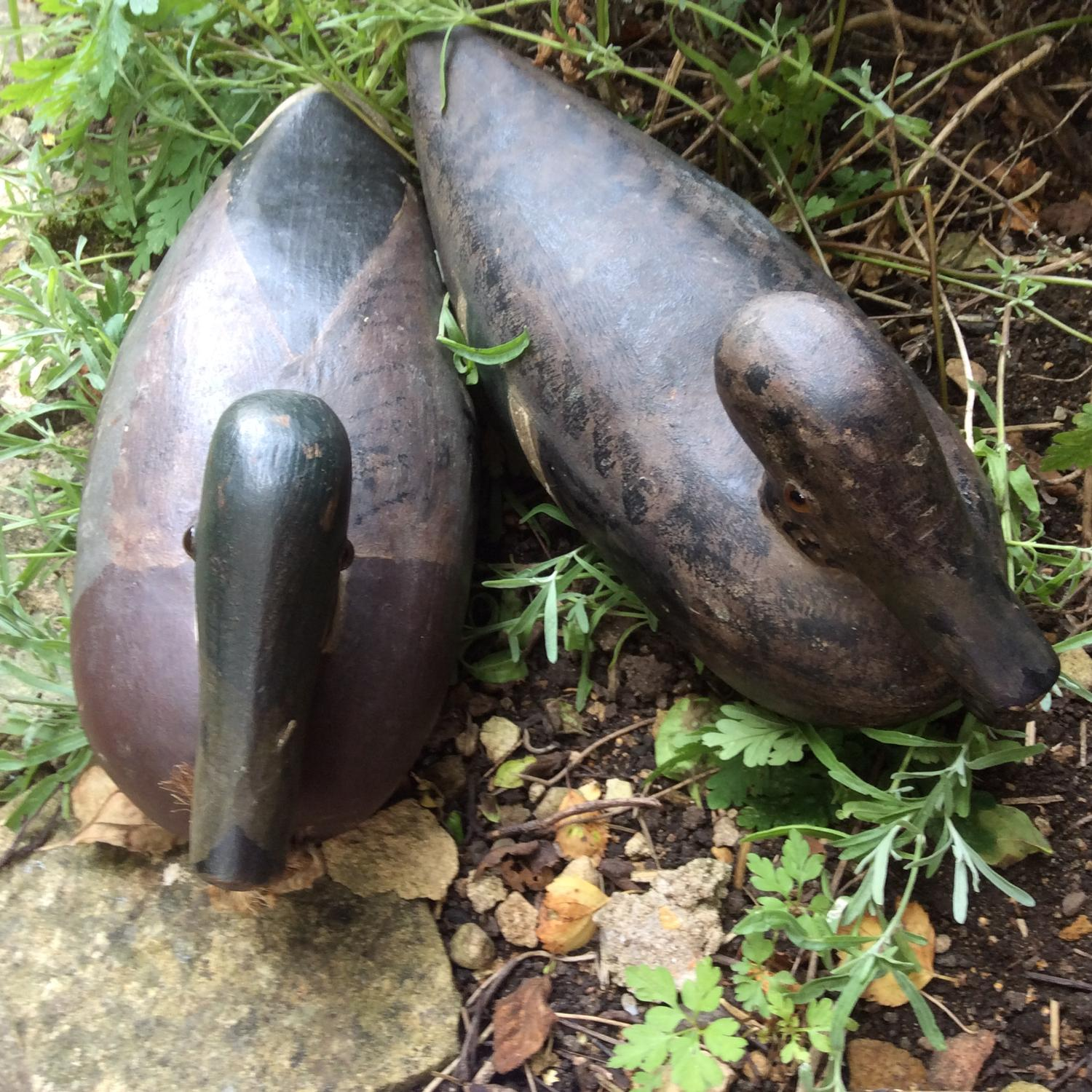 Pair of early 20th century decoy ducks